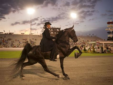 tennessee walking horse national celebration Archives