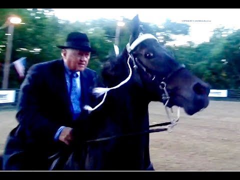 Petition · Equus Film Festival - Sever Ties With Sponsors