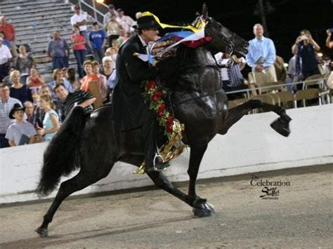 Tennessee Walking Horse event gets new bank sponsor
